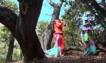 Eden Knutilla, Treelogy, film