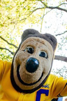 Oski, bear mascot of Cal Athletics