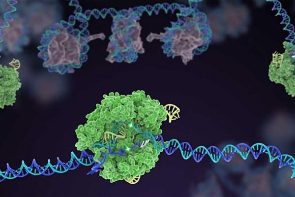 Image of gene sequencing