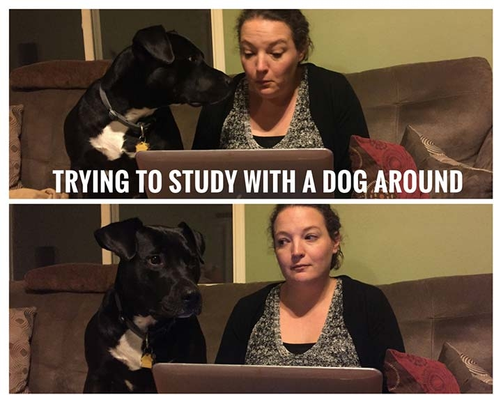 The author trying to study on her laptop while her dog looks on
